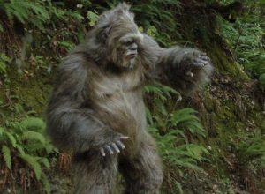 yeti found in Bhutan